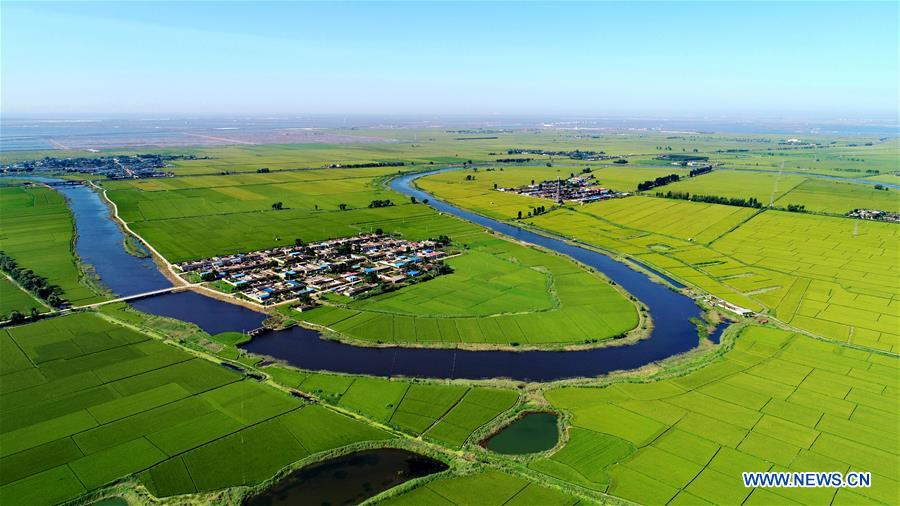 Aerial view of paddy field in Tangshan, N China's Hebei