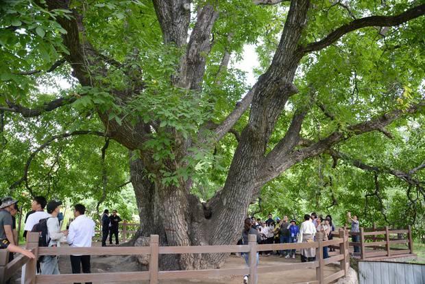 """【新时代 边疆行】""""招财树""""结出藏家人致富的""""金果果"""""""