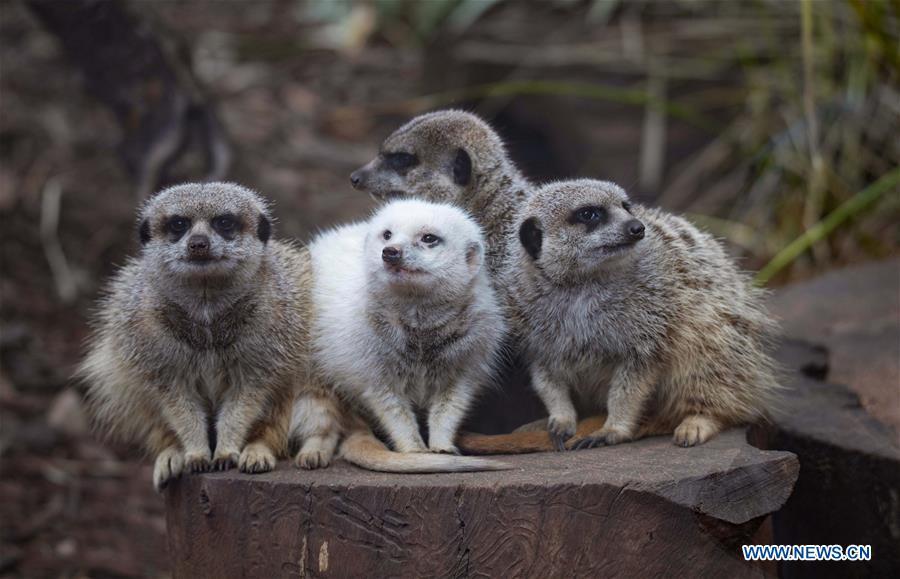Adelaide Zoo in Australia