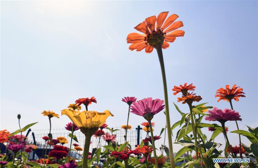 CHINA-JILIN-CHANGCHUN-FLOWERS (CN)