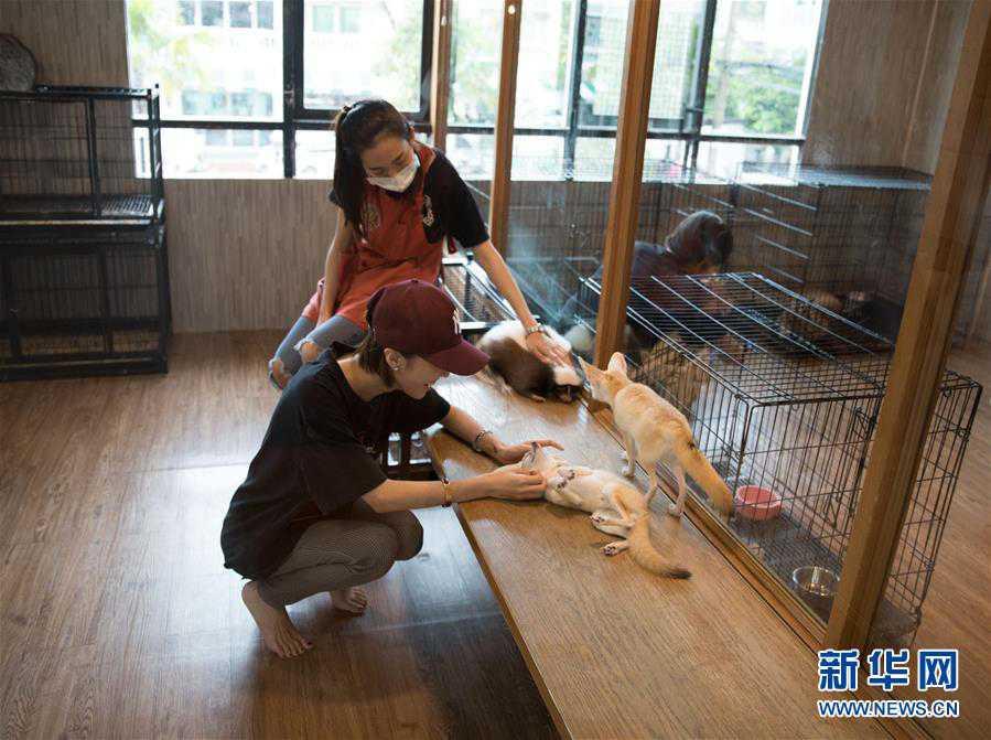 (国际)(8)探访曼谷动物咖啡馆