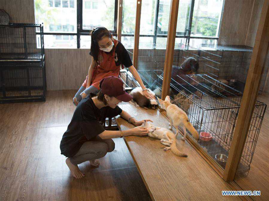 In pics: Animal Cafe in Bangkok, Thailand