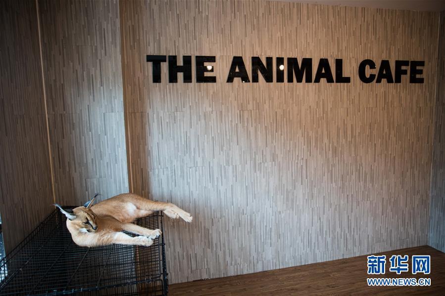 (国际)(1)探访曼谷动物咖啡馆