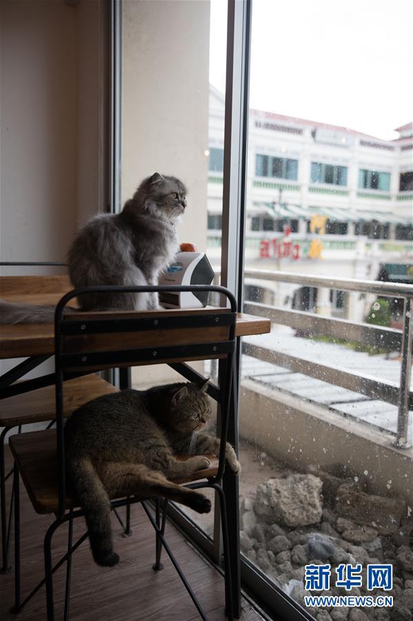 (国际)(6)探访曼谷动物咖啡馆