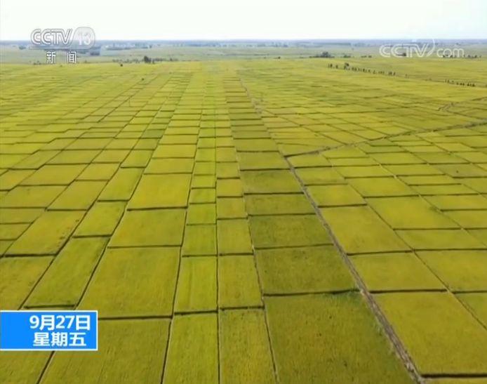 农业农村部:粮食产量有望连续5年超1.3万亿斤