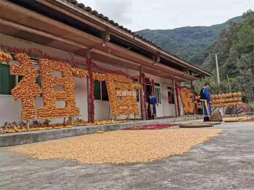 北川90后羌族小伙用一千斤玉米拼字 向祖国问好