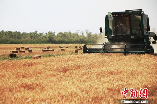 农业农村部:力争今年冬小麦稳定在3.3亿亩以上 优质专用麦比例提高2个百分点