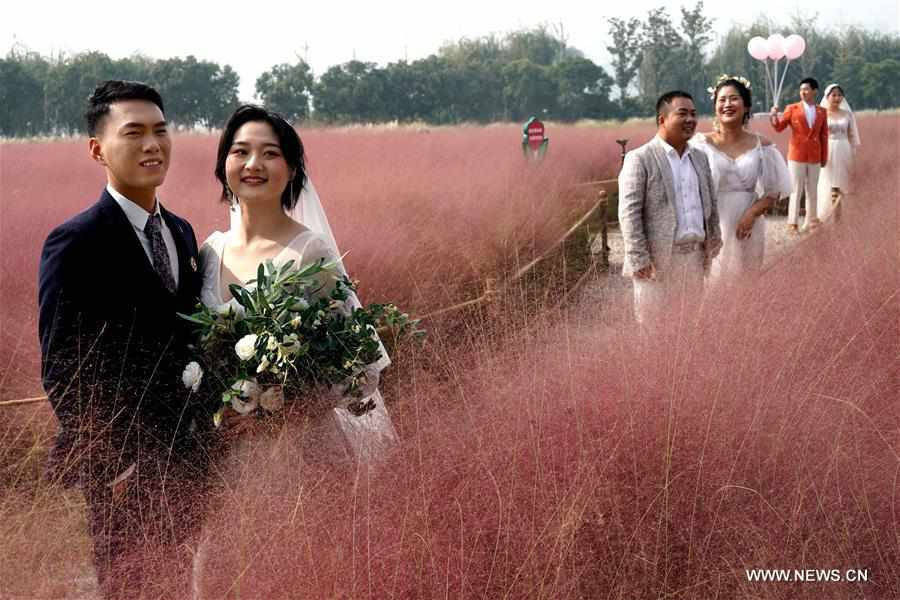 Tourists enjoy leisure time in field of pink grass in Zhengzhou, C China