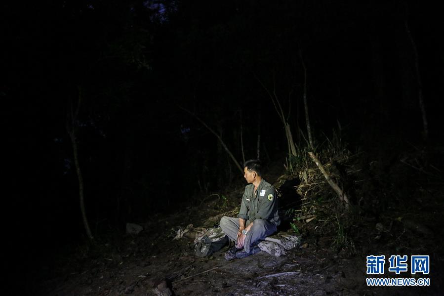 (圖片故事)(4)尋找海南長臂猿