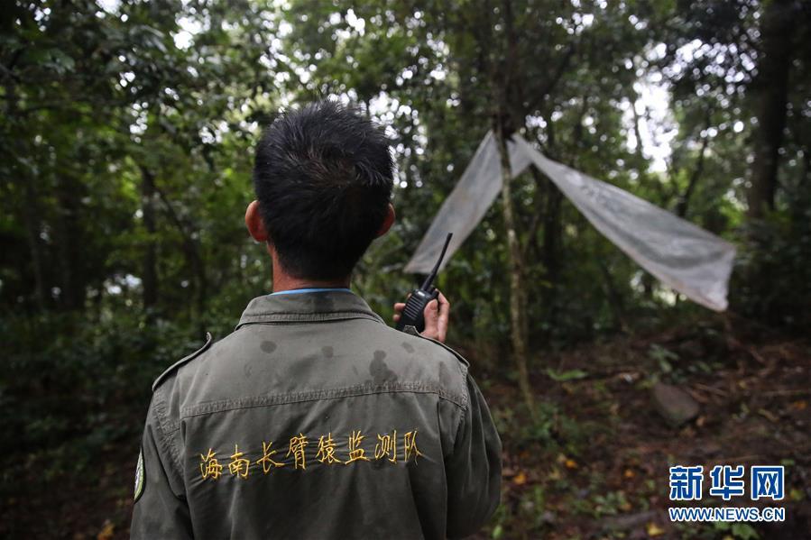 (圖片故事)(10)尋找海南長臂猿
