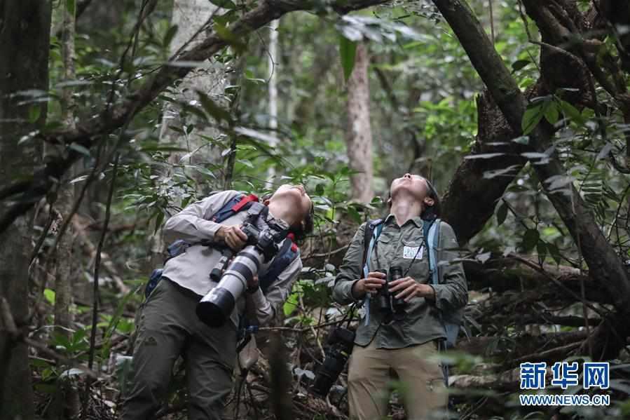 (圖片故事)(6)尋找海南長臂猿