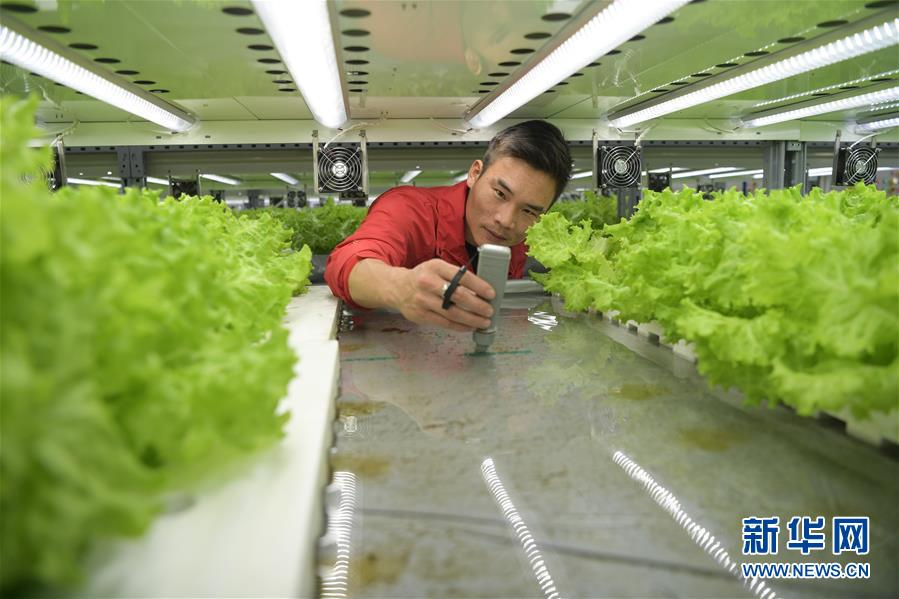 (社會)(4)探訪桂林洋國家熱帶農業公園科技農業