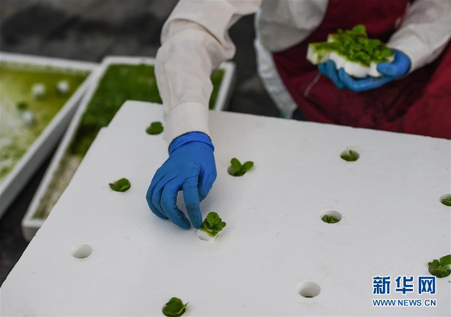 (社会)(1)探访桂林洋国家热带农业公园科技农业