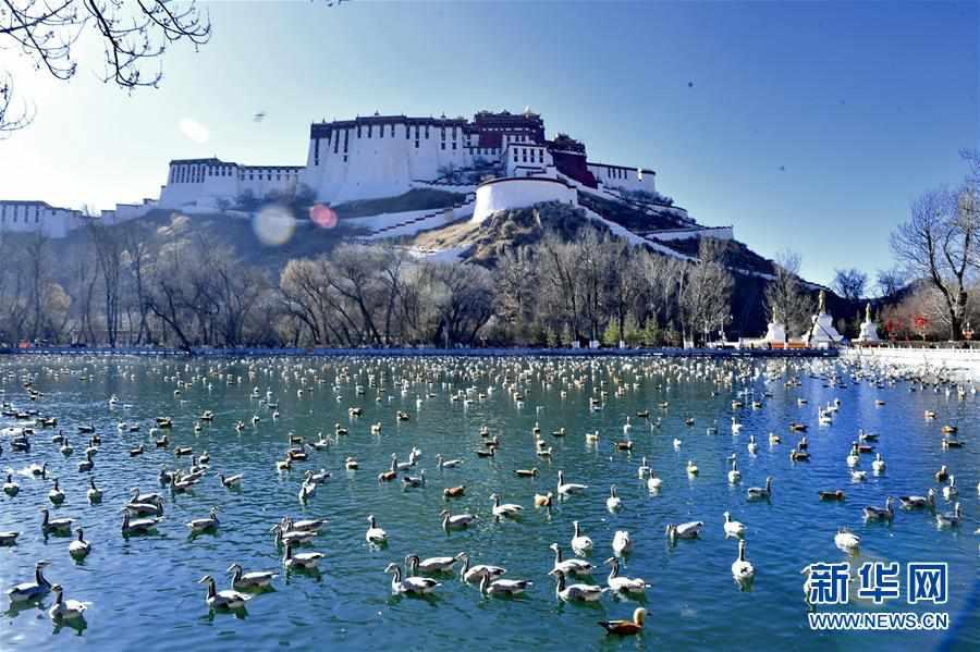 (美麗中國)(1)拉薩:龍王潭公園鳥盡歡