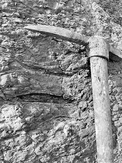 黑龙江首次发现大面积白垩纪恐龙足迹群 该地区恐龙生物群的多样性
