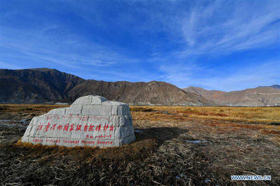 Scenery of Lhalu wetland in Lhasa, SW China's Tibet