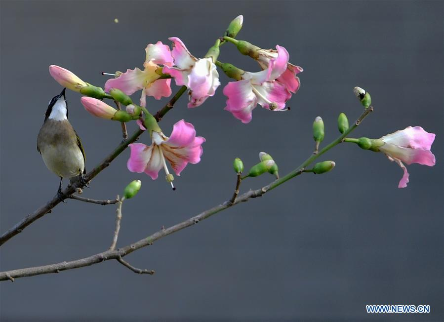 In pics: birds seen on trees in Fuzhou