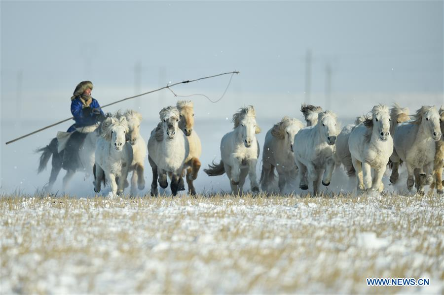Horse training activity held at horse farm in N China's Inner Mongolia