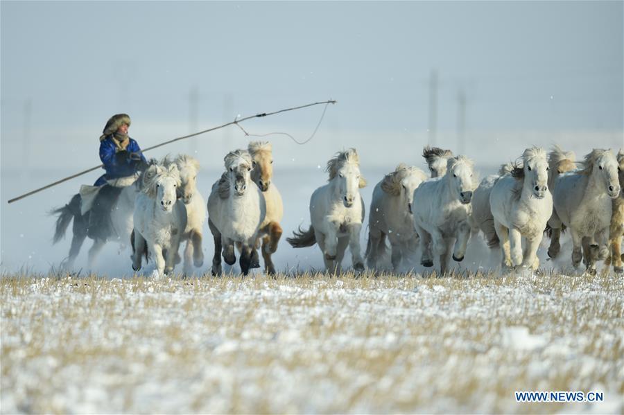 CHINA-INNER MONGOLIA-XILINHOT-HORSE TRAINING (CN)