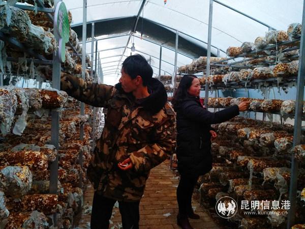 李德东在食用菌大棚里工作。记者江枫摄