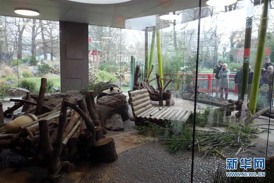 (国际)(1)柏林动物园大熊猫幼崽首次与公众见面