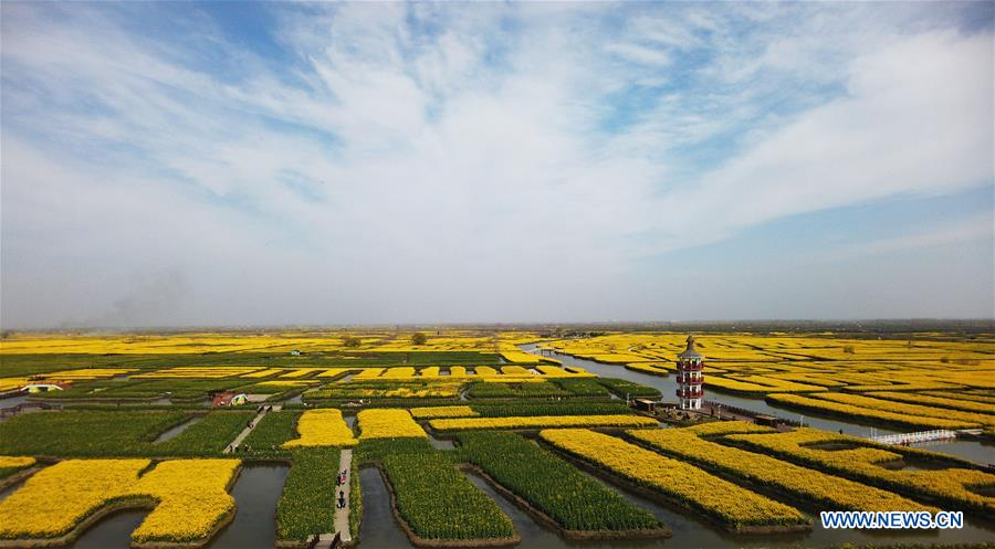 Scenery of cole flowers in Jiangsu