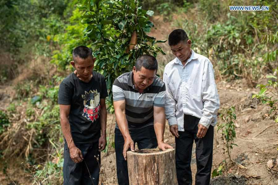 Villagers' living environment improved, income increased in Mannan Village, Yunnan