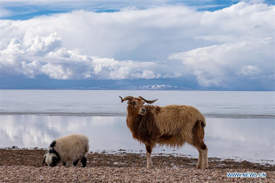 CHINA-TIBET-NAQU-SILING LAKE-SCENERY (CN)