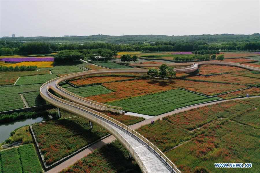 In pics: flower fields at San Tai Mountain Forest Park in Suqian City, Jiangsu
