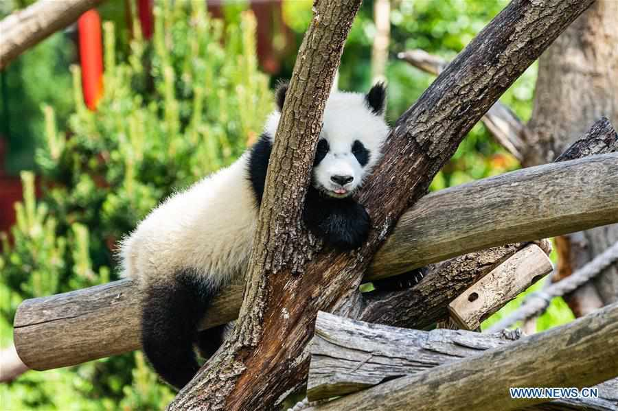 Visitors visit Panda Pavilion of Zoo Berlin in Germany