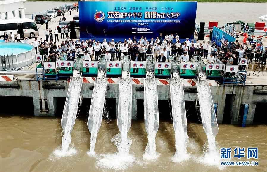 (社会)上海举行珍稀水生生物增殖放流活动