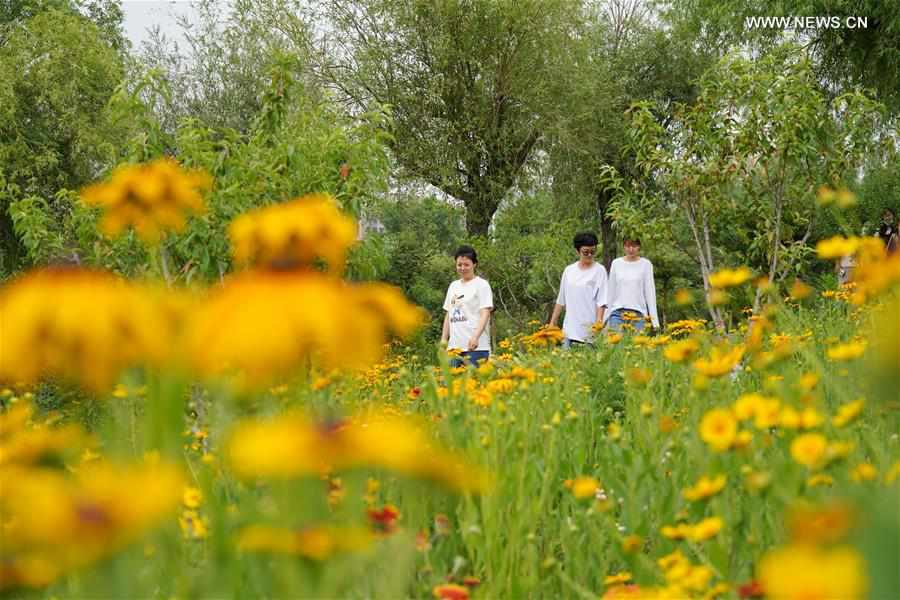 Ecological environment improved in coal mining area in Tangshan City, N China's Hebei