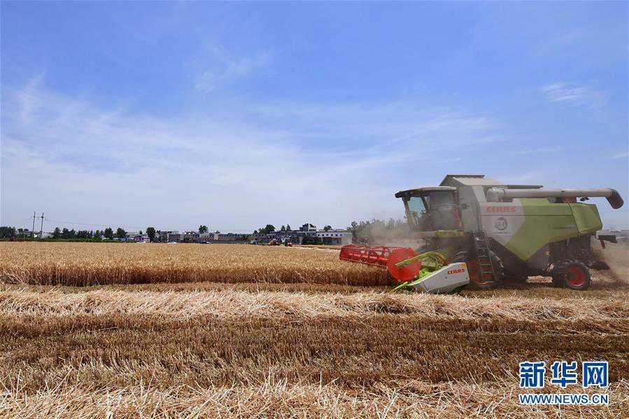 (关注三夏・图文互动)(2)效率提高 模式变革――河南麦收新观察