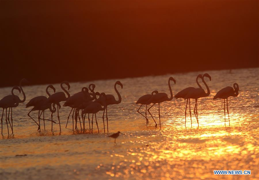 In pics: flamingoes at Lake Mogan in Ankara, Turkey