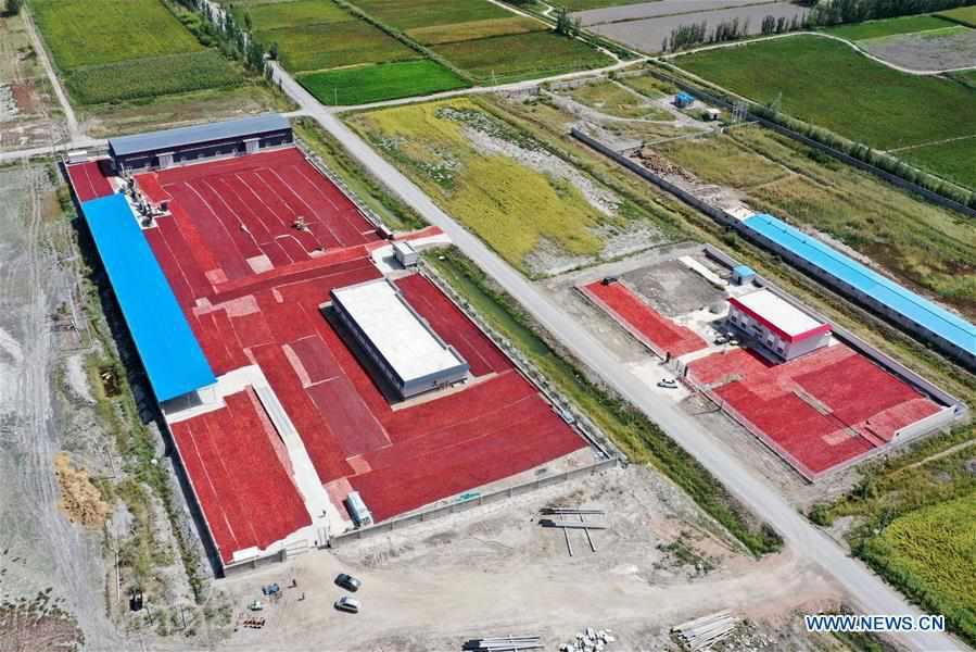 CHINA-XINJIANG-BOHU COUNTY-CHILI-HARVEST (CN)