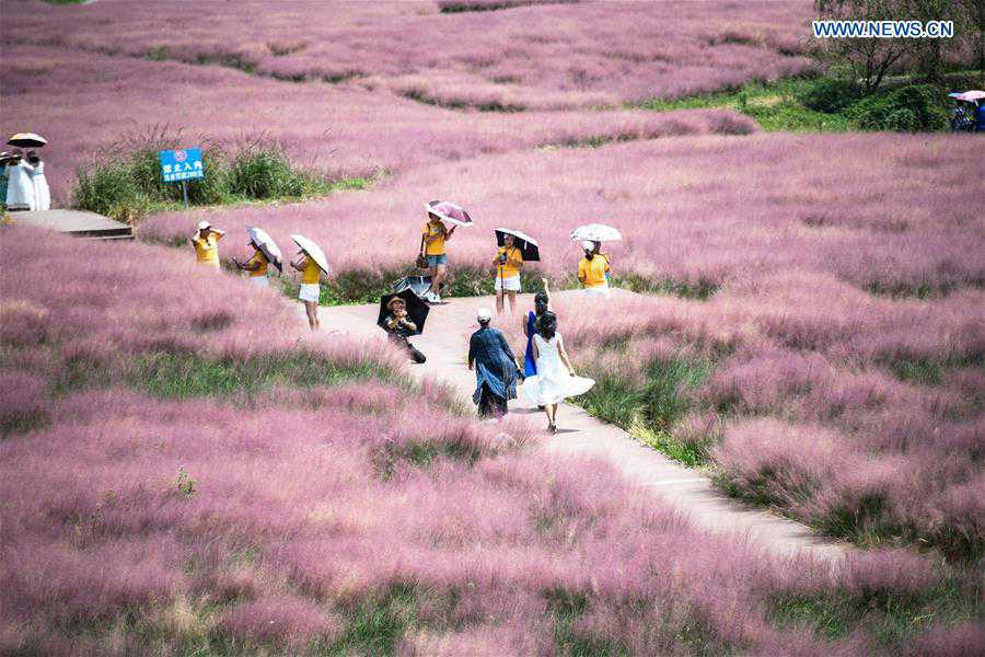 CHINA-GUIZHOU-PINK GRASS-TOURISM (CN)
