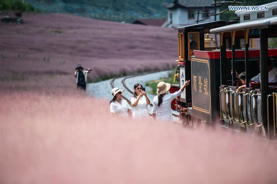 CHINA-GUIZHOU-PINK GRASS-TOURISM (CN)