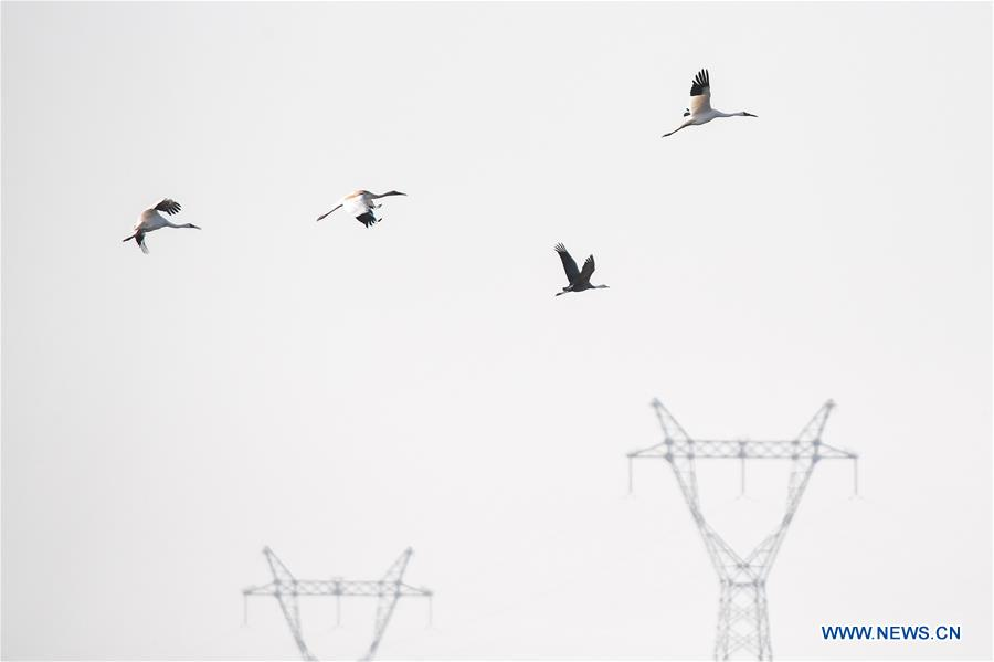 In pics: birds at Momoge National Nature Reserve in Jilin