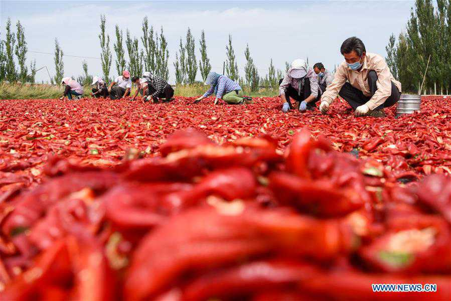 CHINA-XINJIANG-TIANSHAN MOUNTAINS-HARVEST (CN)