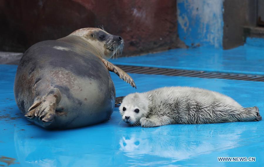 New born seal cub seen at Haichang Ocean Park in Shanghai