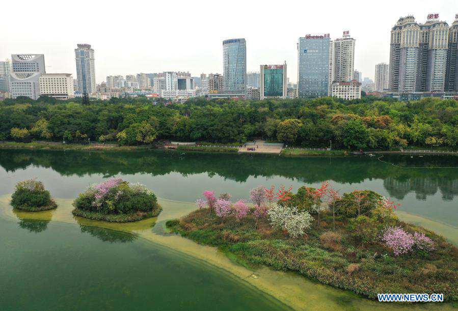 In pics: blooming flowers on small islands in middle of Nanhu Lake in Nanning