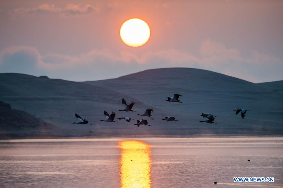 Measures taken to protect habitat of black-necked cranes in Zhaotong, Yunnan