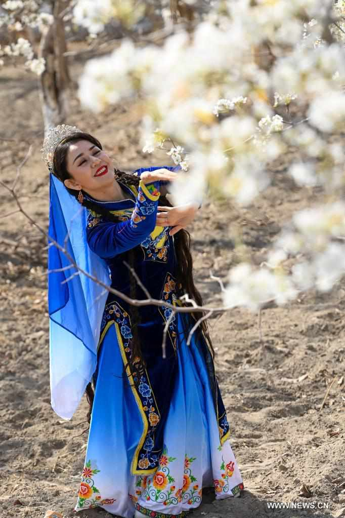 People enjoy blooming pear blossoms in Korla, China's Xinjiang