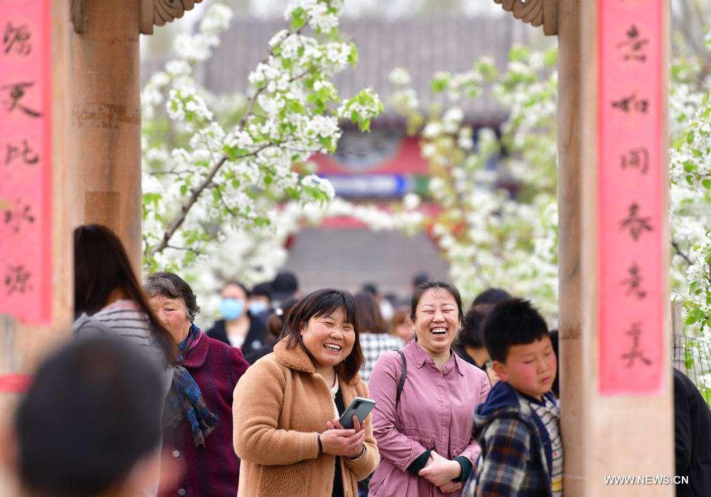 Pear blossom festival kicks off in Qian'an, Hebei