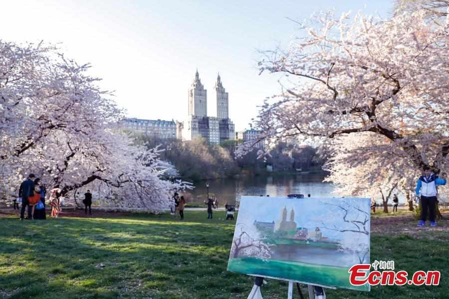 Spring scenery in New York's Central Park