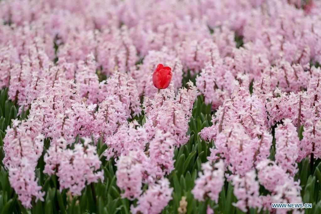18th edition of international flower exhibition held in Belgium
