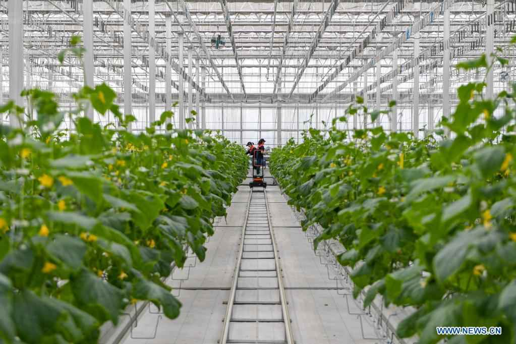 Green house in NE China produces various crops all year round