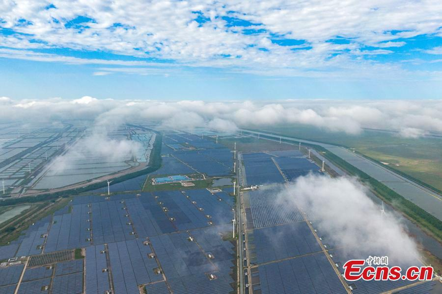 Multi-level green industries improve ecological environment in E China's Jiangsu