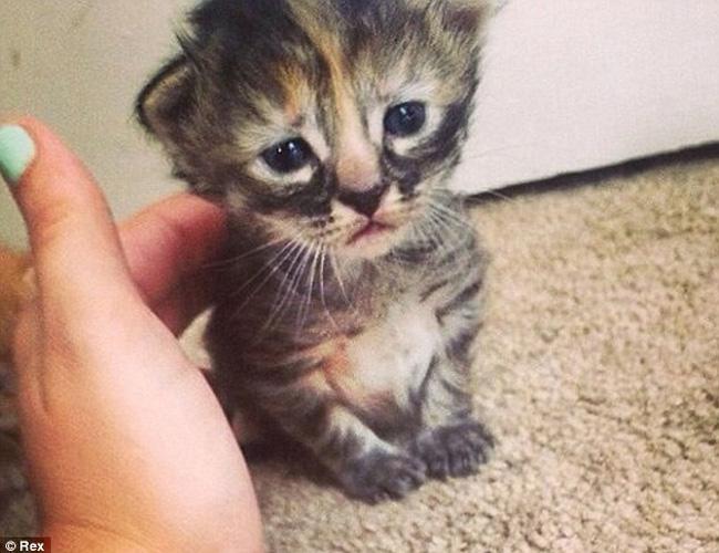 英国一a表情小猫走红看表情包电脑动态无法图片