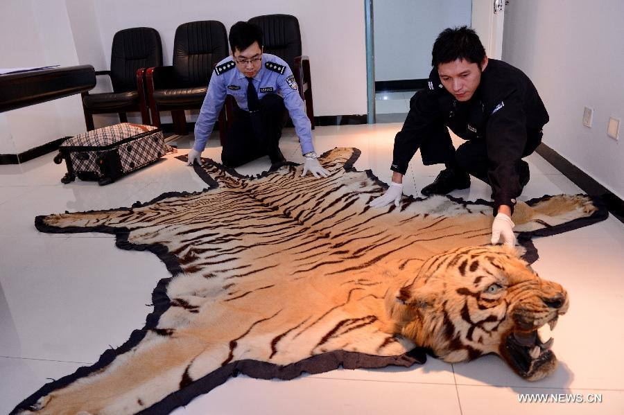Police officers demonstrate a tiger skin seized from a group of wildlife smuggling suspects at the local customs of Fuzhou, capital of southeast China's Fujian Province, Nov. 27, 2014.